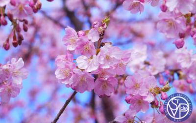 St. Vincent de Paul – Month of April Reflections